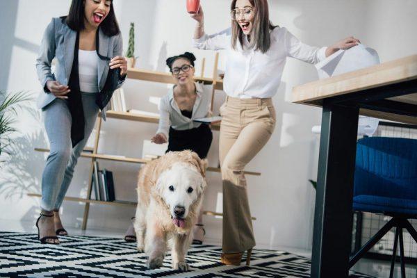 Pupil w biurze, jeżeli nie przeszkadza współpracownikom i szefom, wpływa pozytywnie na atmosferę w firmie.